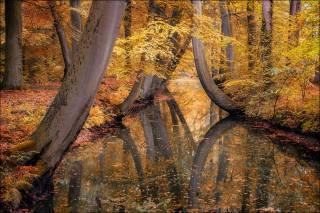 podzim, krajina, nizozemsko, stromy, kanál, odraz