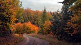 cesta, les, podzim