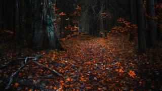 stromy, listy, podzim