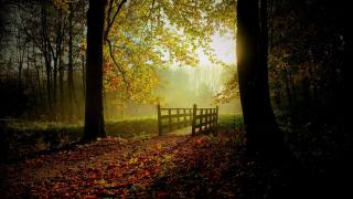 zeleň, podzim, les, listy, slunce, stromy, most, mlha, proud, pás