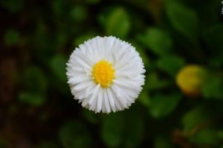flower, background, bokeh