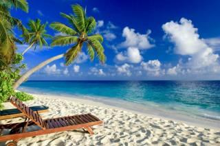 тропіки, природа, океан, пальми, красиво