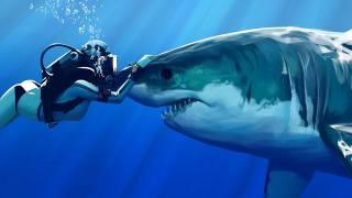 shark, blue sea, predator