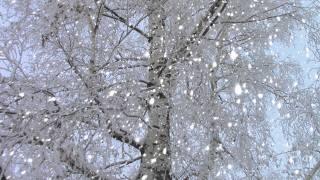 зима, ветки, иней, снег, дерево