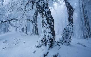 природа, лес, деревья, зима, снег, туман