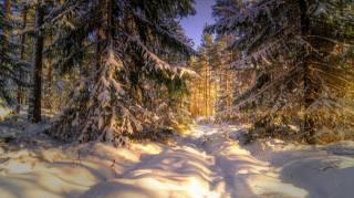 природа, зима, снег, лес, деревья, ели, тропинка, закат