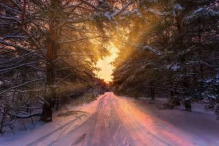 природа, зима, дорога, лес, деревья, закат, Aleksei malygin