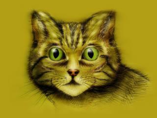 cat, muzzle, background