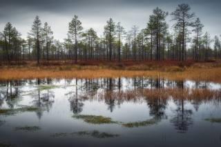 autumn, swamp, photo, Михаил Туркеев