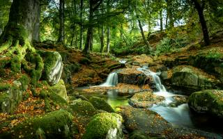nature, autumn, forest, trees, stones, moss, waterfall