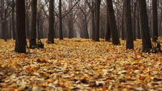 trees, leaves, November