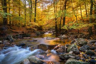 stream, forest, leaves