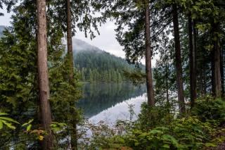 дерева, озеро, відображення