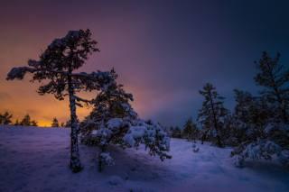 зима, сніг, ліс