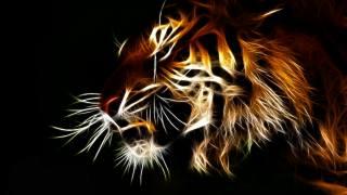 амурський, тигр, кішка, погляд, малювання