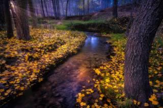 autumn, forest, nature, stream