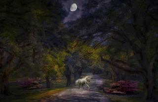 night, the moon, forest, unicorn
