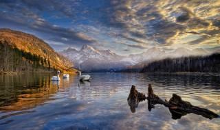 краєвид, гори, птахи, природа, озеро, берег, Австрія, лебеді, Ліси, Almsee, Альмзе