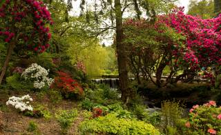 Великобритания, Сады, Bodnant, сад, деревья, КУСТЫ, природа