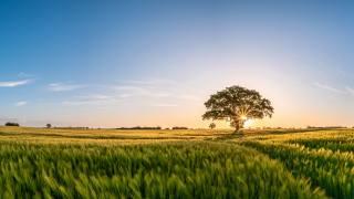 ранок, Рассвет Поля, небо, дерева, природа