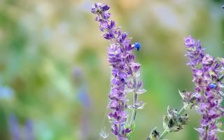 цветы, лето, паутина