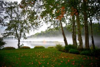 příroda, stromy, bříza, podzim