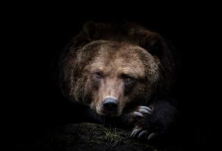 Камчатский, медведь, хищник, бурый медведь, Животное