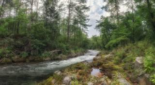 лес, деревья, природа, растения
