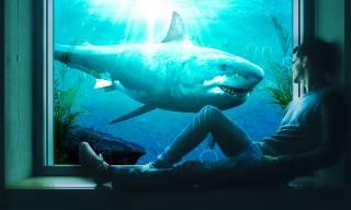 muž, okenní parapet, okno, žralok, podmořský svět