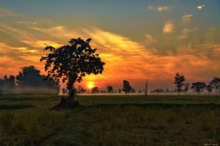 дерева, небо, захід