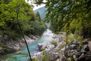 Slovenia, river, forest, stones, river Soca, branches, nature