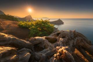 Вячеслав Лузанов, Крим, природа, краєвид, море, берег, скелі, дерева, бук, стовбур, сонце, захід