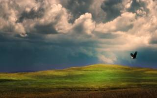 хмари, орел, політ, трава