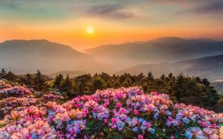луг, квіти, гори, небо, сонце, промені