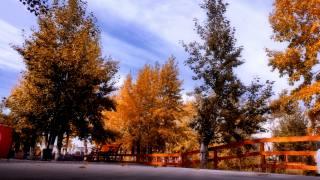 podzim, zeleň, žluť z, krásně, touha