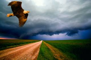 landscape, field, road, the sky, eagle